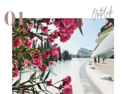 Mooie bloemen in Valencia